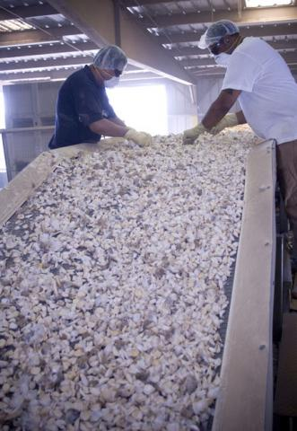 Sorting Cracked Garlic